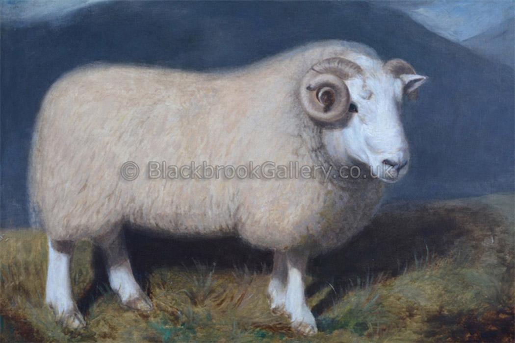 Cheviot Ram by William Shiels