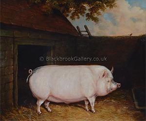 Pig Outside A Sty