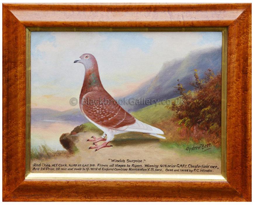 Antique Animal Portrait Windos Surprise racing pigeon By Andrew Beer