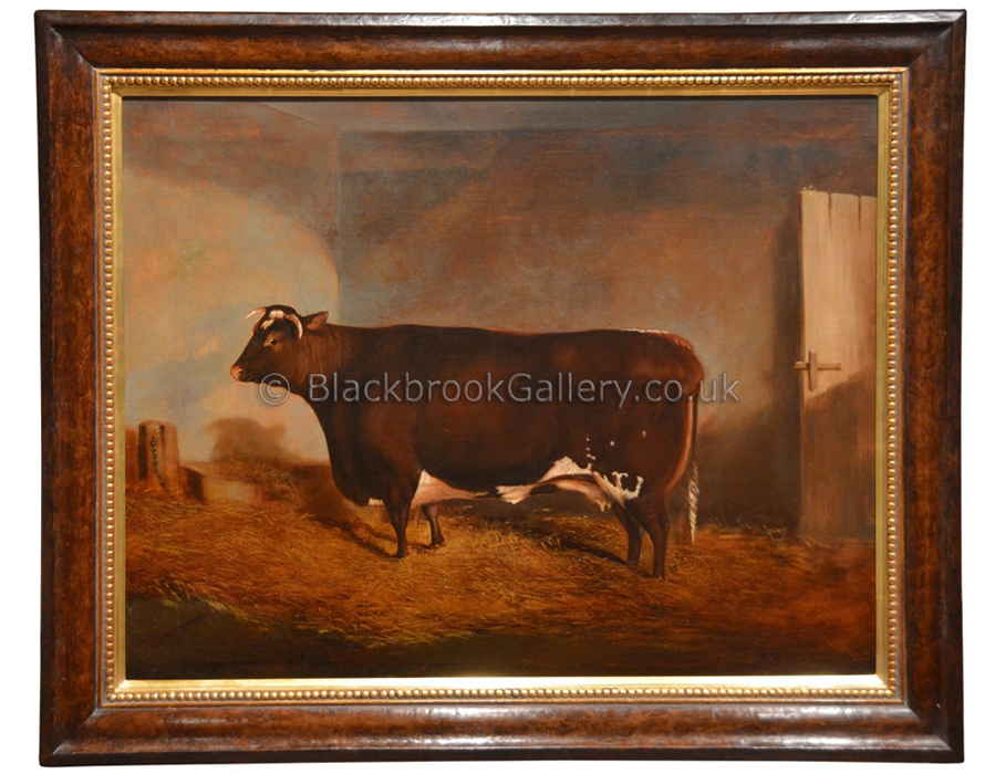 Shorthorn Cow In Stable Antique Animal Portrait