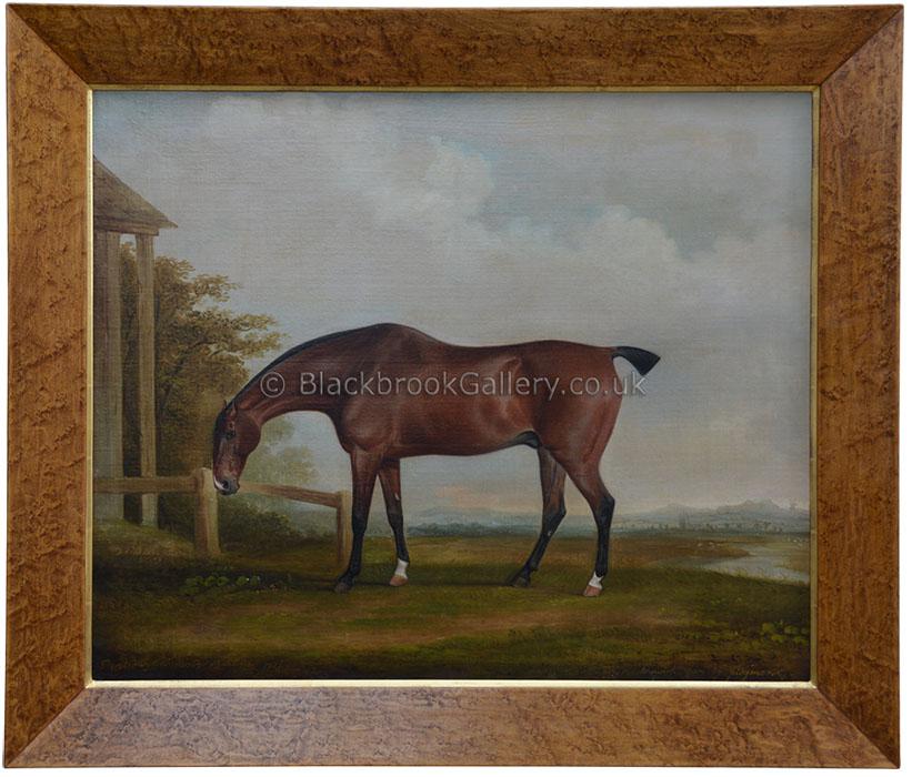 Bay Horse By Thomas Weaver