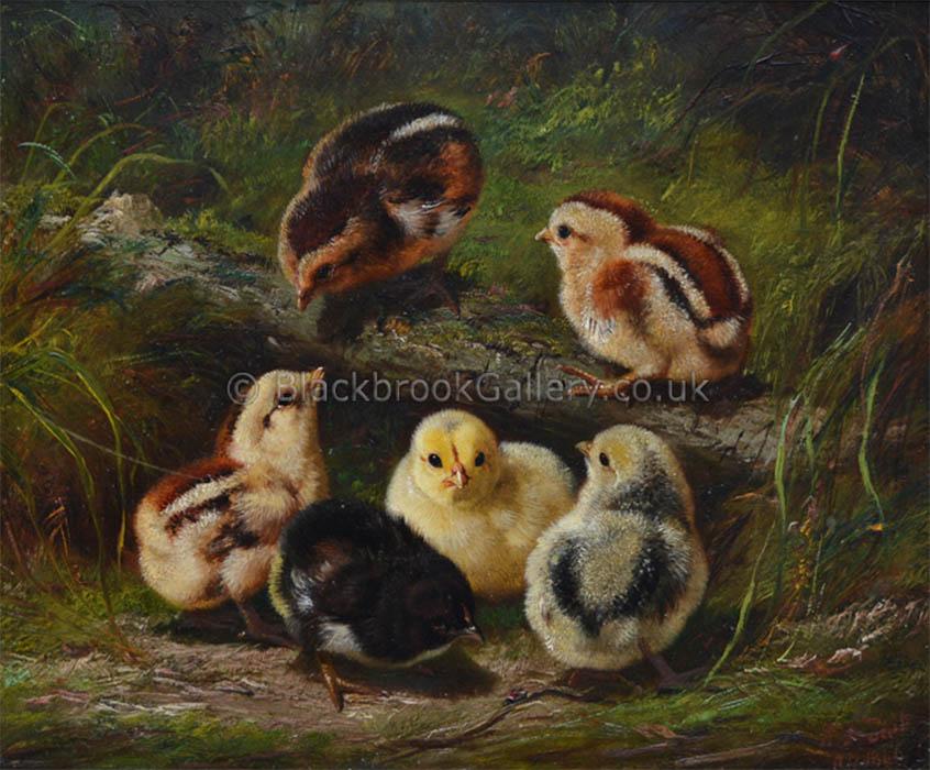 Chicks By Arthur Fitzwilliam Tait