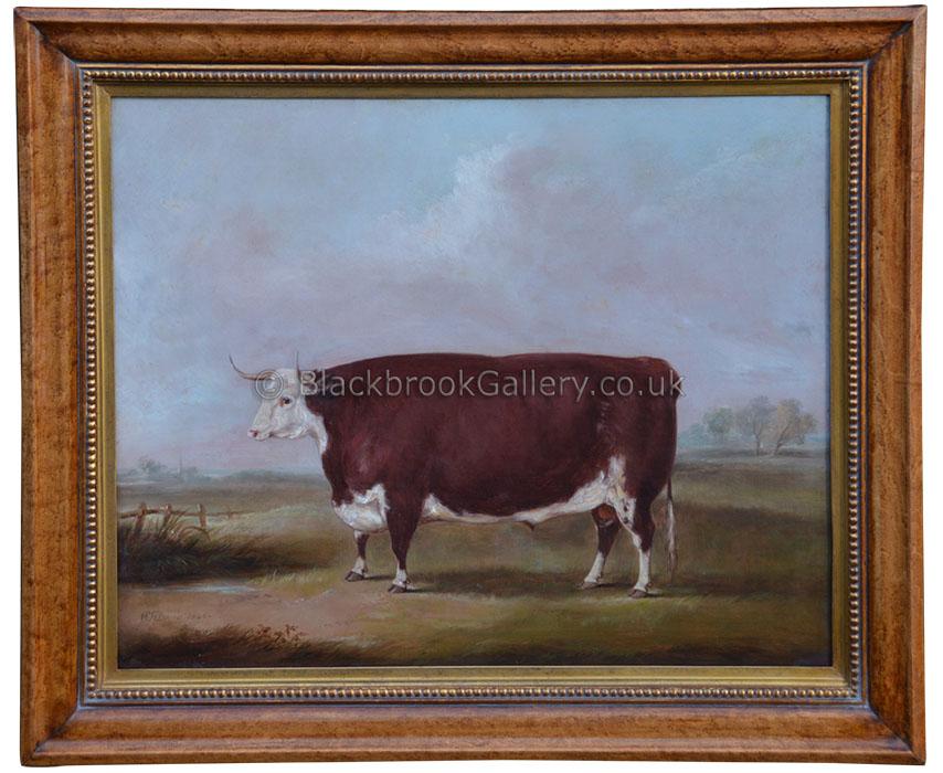 Hereford Steer By W.H.Davis