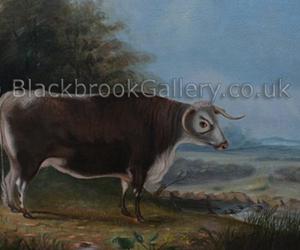 Longhorn Cow In A Landscape