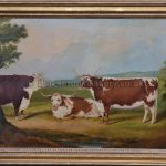 Longhorn Cow's with a Hereford Bull
