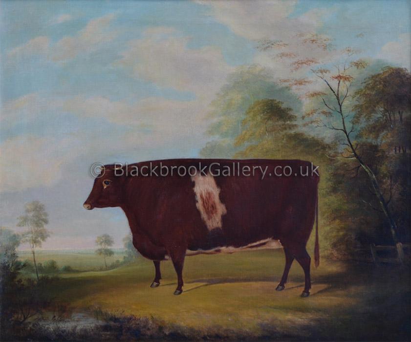Naive Shorthorn Heifer Antique Animal Painting