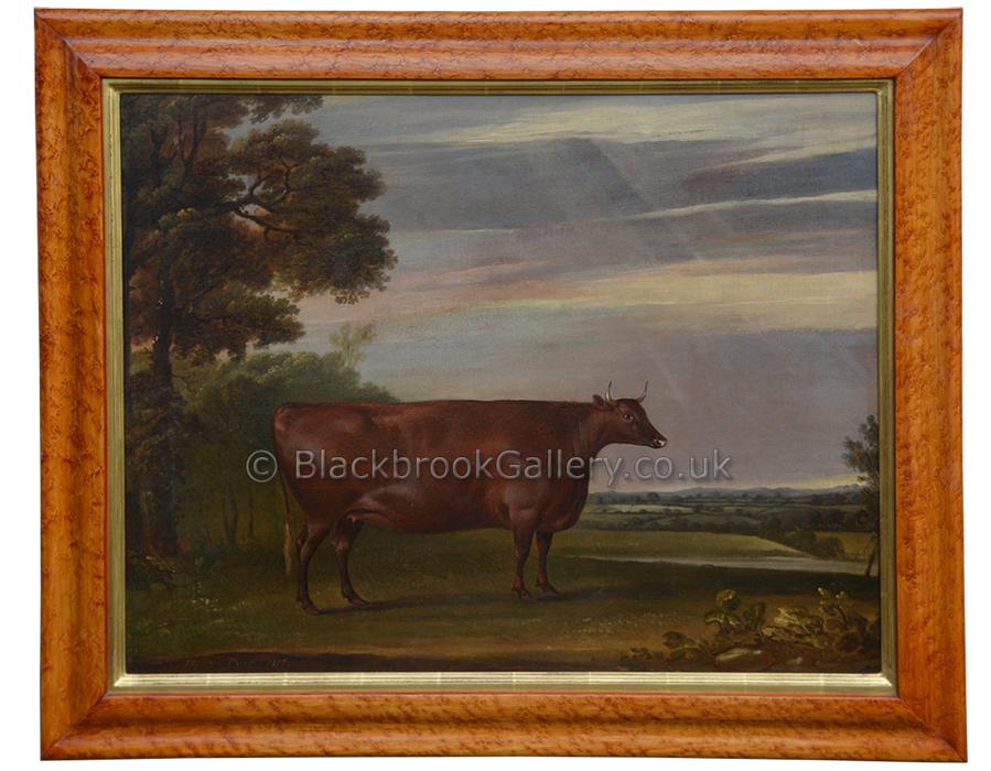North Devon Heifer, Antique Animal Portrait