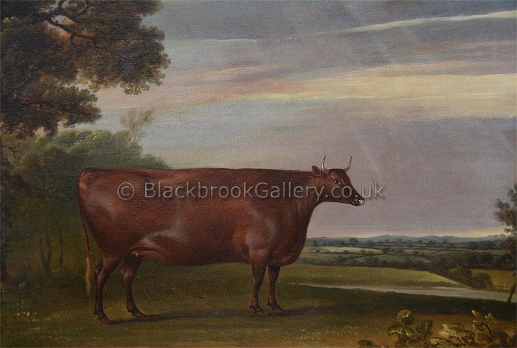 North Devon Heifer By Thomas Weaver