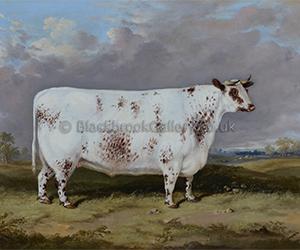 Prize Fat Shorthorn Heifer by John Christopher Bell