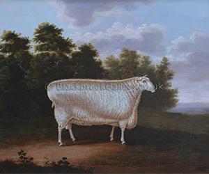 Prize Ram