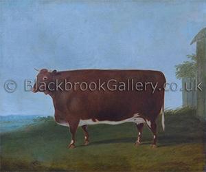 Prize Red Shorthorn Heifer