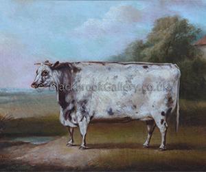 Prize Shorthorn Heifer By W.H.Davis