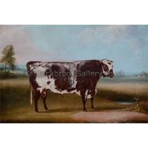 2016-12-19-shorthorn-bull-300_2[1]