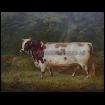 2018-08-30-ayrshire-bull-small-image[1]
