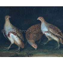 english-partridge-1790-small[1]