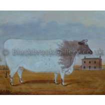 light-roan-shorthorn-heifer-with-farmhouse-beyond-1841-small[1]