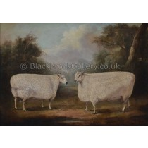 two-prize-winning-longwool-cotswold-rams-painting[1]