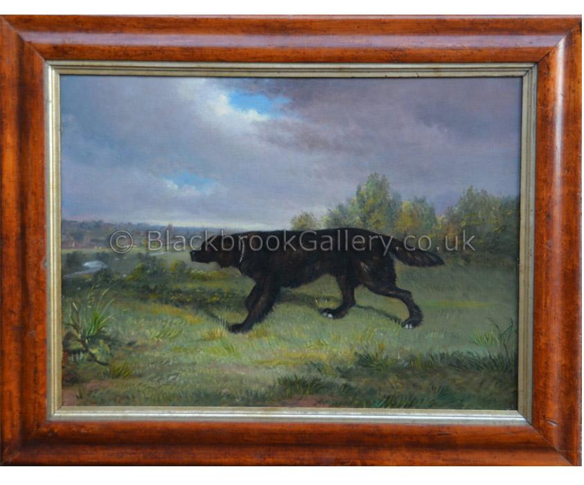 Flat coat retriever antique animal portrait