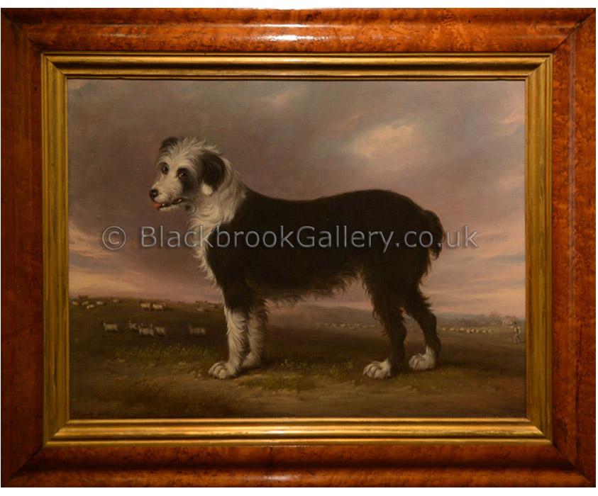 Sheepdog by D. Gee antique animal portrait