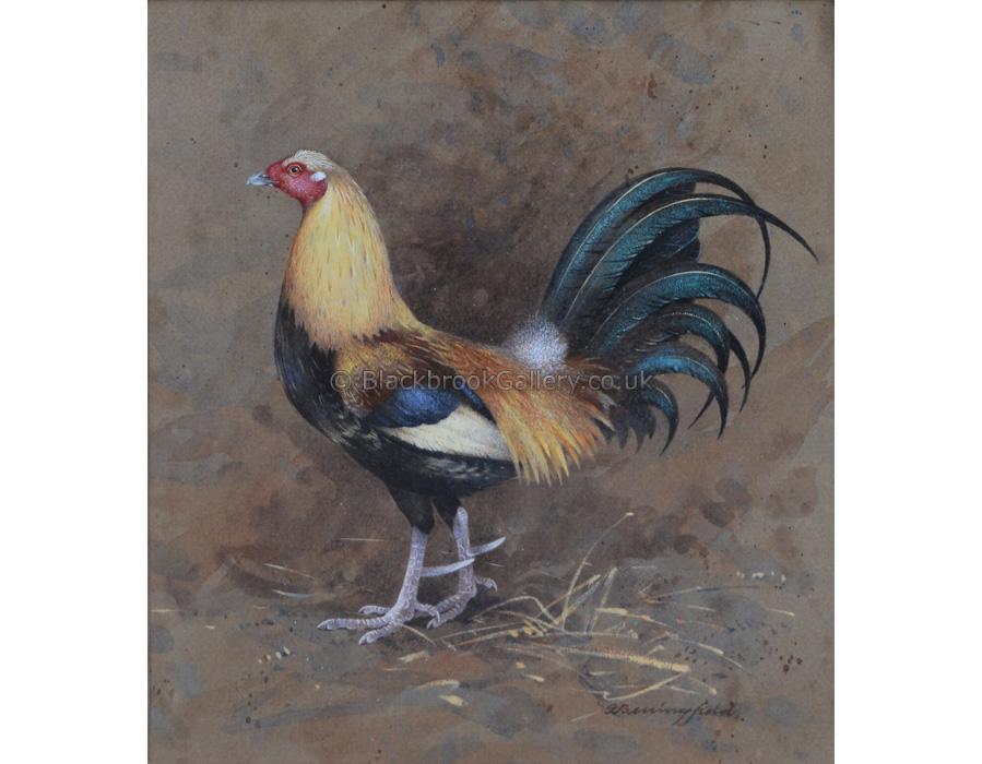 Spectacular Game Bird, Antique Animal Painting