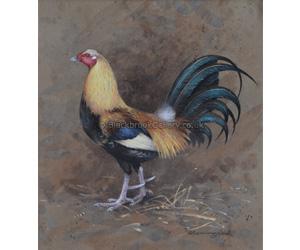 Spectacular Game Bird, Antique Animal Portrait