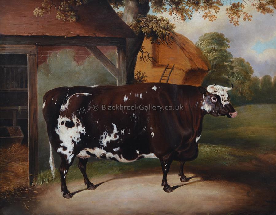 Portrait Of A Cow, Antique Animal Portrait