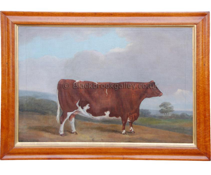 Primitive Suffolk steer antique animal portrait
