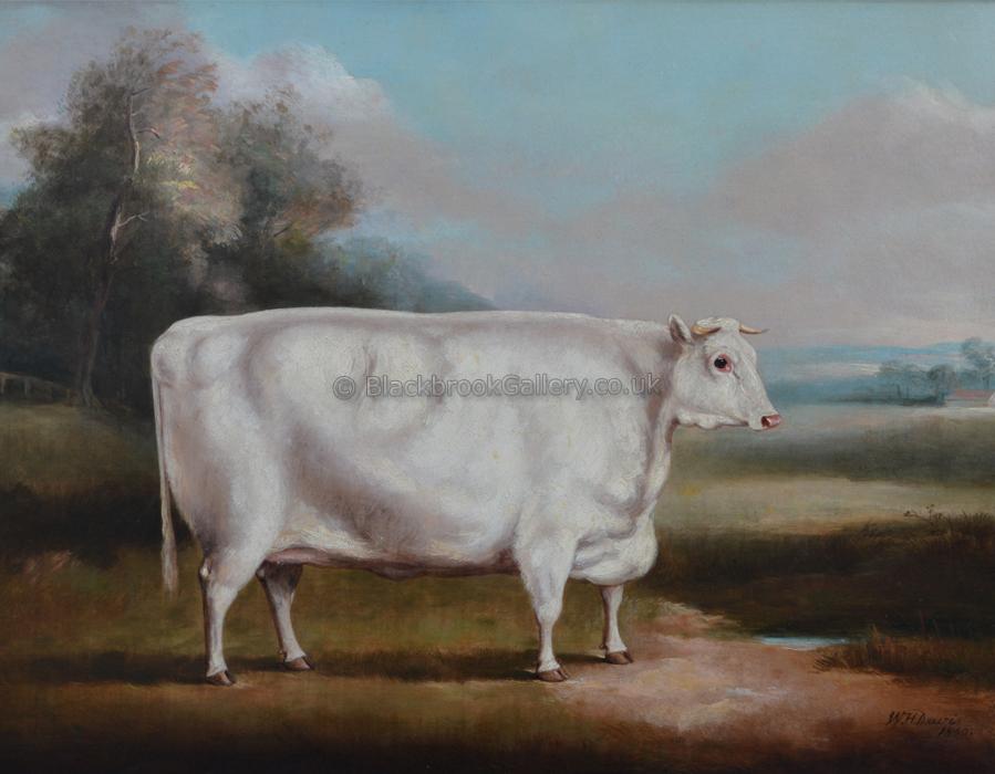 White Shorthorn Heifer, Antique Animal Painting