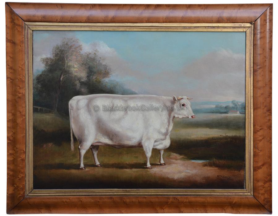 White Shorthorn Heifer Framed, Antique Animal Painting