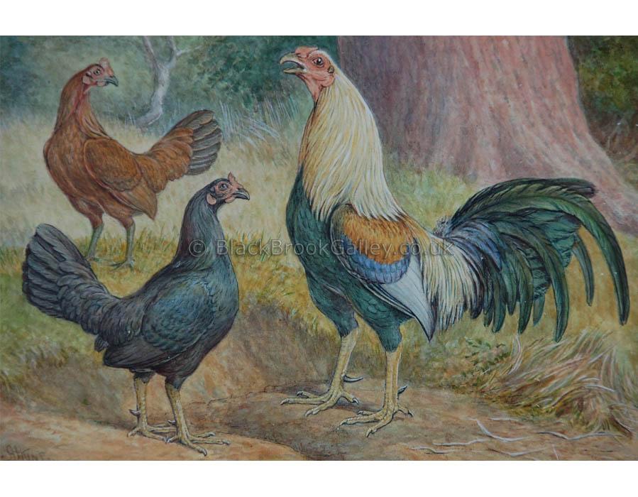 Game Fowl Trio by Herbert Atkinson Antique animal paintings
