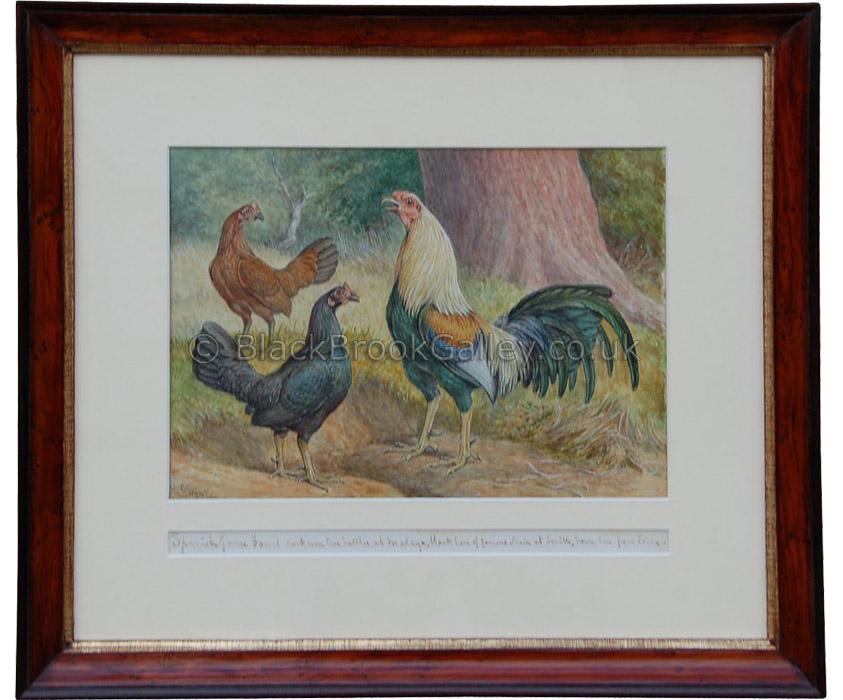 Game Fowl Trio by Herbert Atkinson Antique animal portrait
