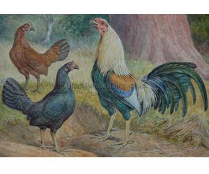 Game Fowl Trio by Herbert Atkinson Naive animal paintings