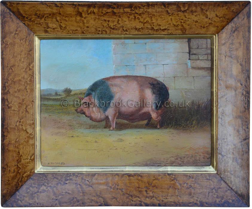 The fat pig by J. Bedford antique animal portrait